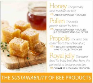 Sustainability Of Bee Produ jpg 300x266 Beekeeping products Tentorium: history and nowadays